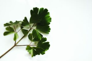 diy eye cream for dark circles - parsley